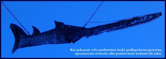 rybapilka.jpg