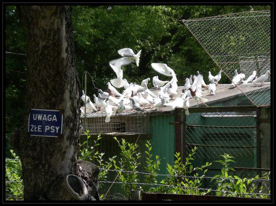 reservoir doves