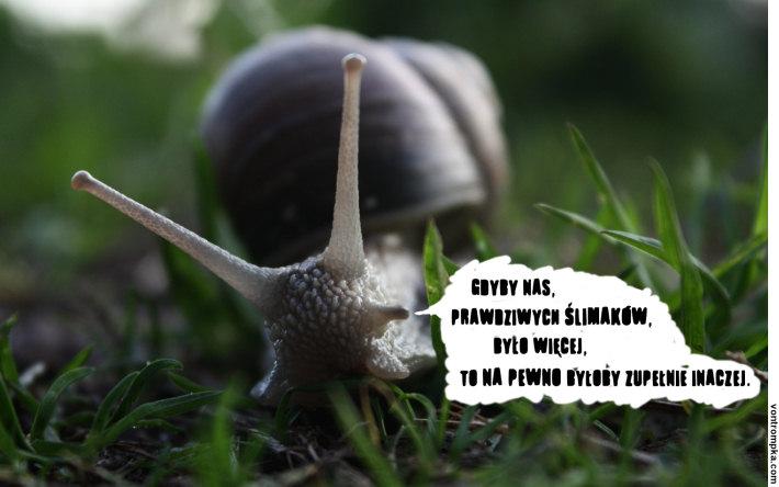 gdyby nas, prawdziwych ślimaków, było więcej, to na pewno byłoby zupełnie inaczej
