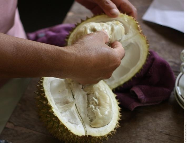 durian, jaki jest, każdy widzi