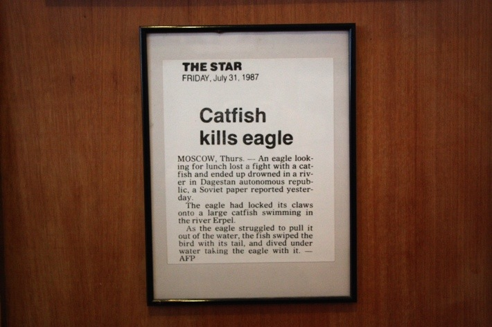 kuching. moscow. catfish kills eagle