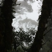 Malezja, Cameron Highlands, Gunung Brinchang