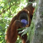 Bukit Lawang, Sumatra