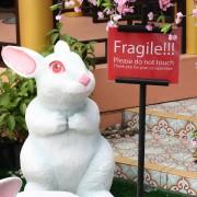 królik roku w Kuala
