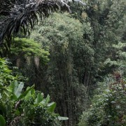 bambus, skala!