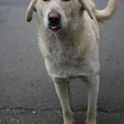 psów w Rumunii jest wiele, zwykle niegroźnych. to pierwsze zdjęcie po przekroczeniu granicy.