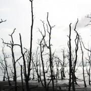 wybrzeże borneańskie